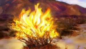 Burning Bush (610x351)
