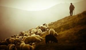 Shepherd and Flock2 (610x351)