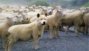 Wolf in Sheep's Clothing (610x351)