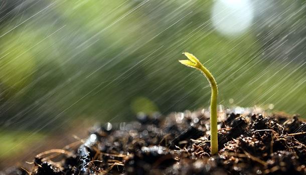 Isaiah 55:10-13: Like Rain and Snow